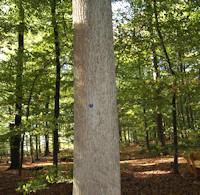 B Mittlerer Baum